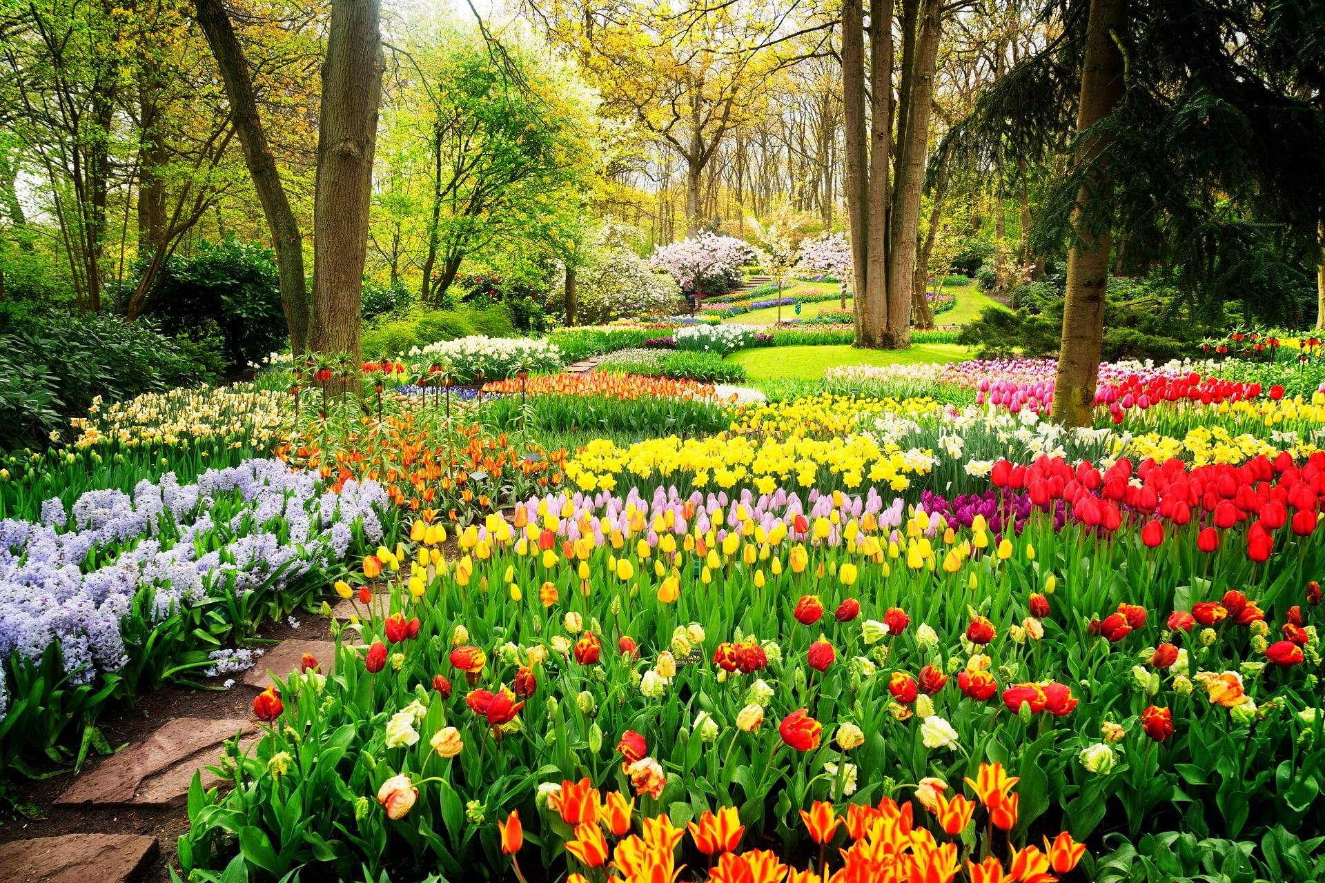 Amsterdam-Keukenhof-Gardens