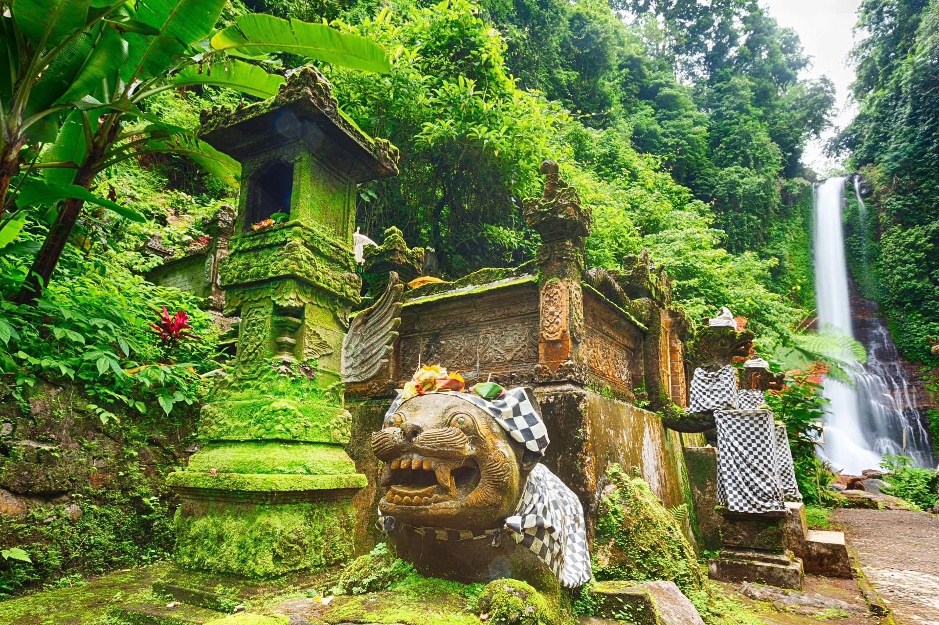 Bali Rainforest_110491856