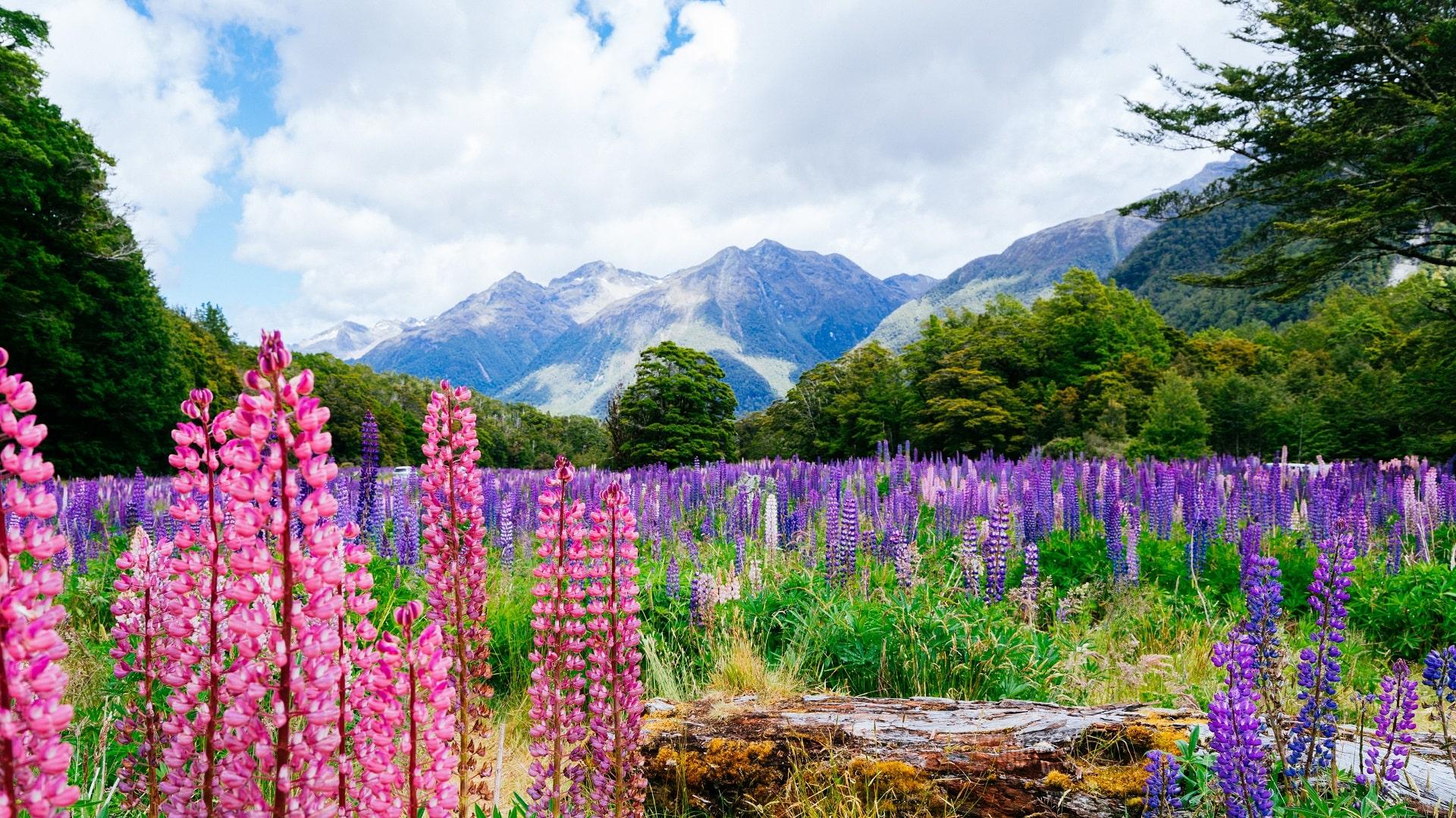 Fiordland National Park, New Zealand 02-min